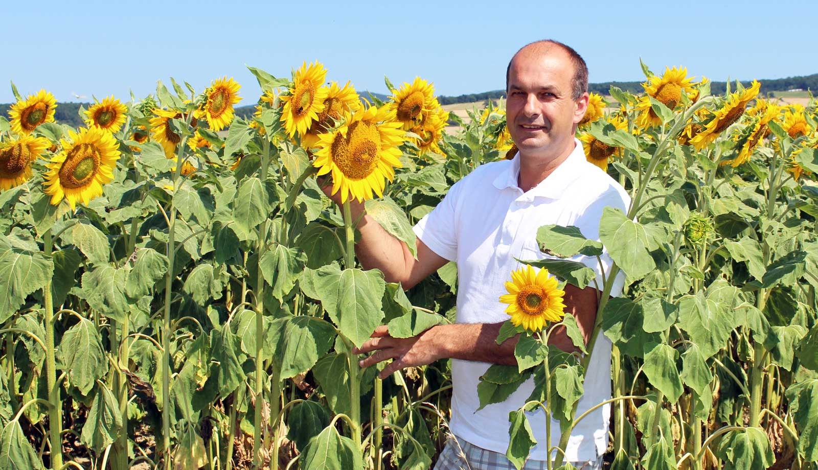 Andreas Kovacs im Sonnenblumenfeld